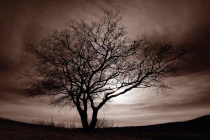 "Foto: Katrin Jeschke, ""Momente im Licht"""