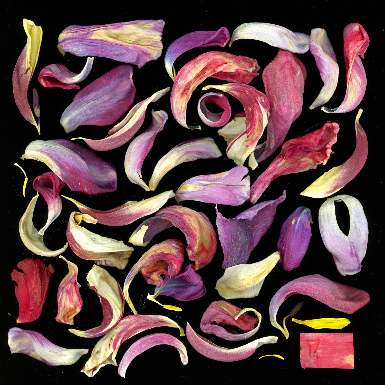 Florale Scanogramme. Veröffentlichung nur mit Einwilligung des Urhebers. Mit Ausnahme der öffentlichkeitsarbeit für die Ausstellung in der Epson Galerei Zimgst. Foto: Matthias Weber